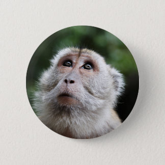 Monkey looking to the heavens 2 inch round button
