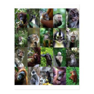 Monkey primate montage postcard