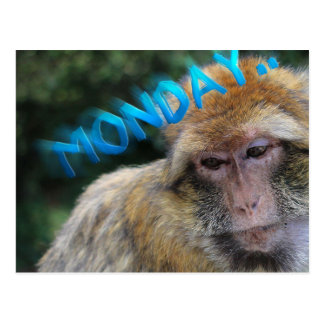 Monkey sad about monday postcard