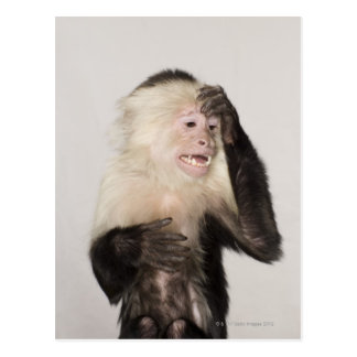 Monkey scratching itself postcard