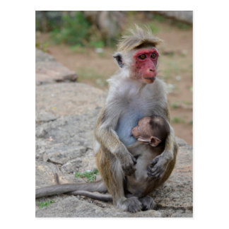 monkey with her baby postcard