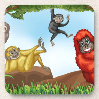 Monkeys Coaster