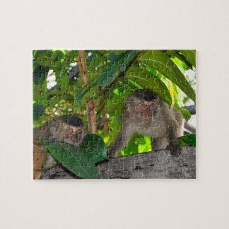 Monkeys in Rainforest of Borneo Puzzle
