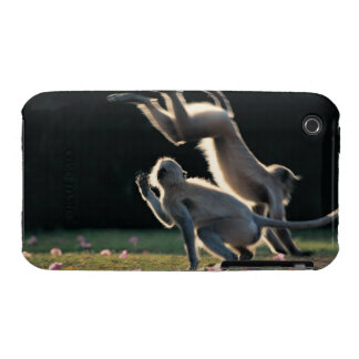 Monkeys playing iPhone 3 cover