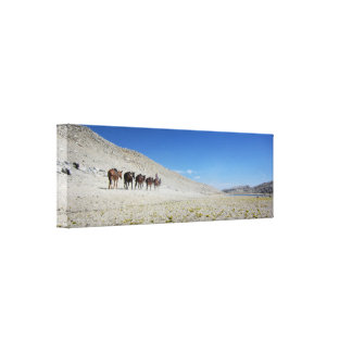Mono Pass Pack Train - Sierra Canvas Print