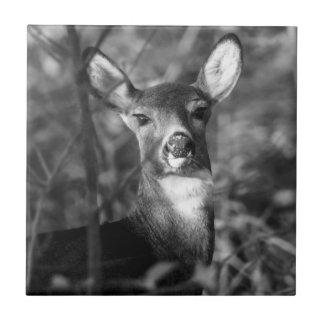 Monochromatic White-Tailed Deer Ceramic Photo Tile