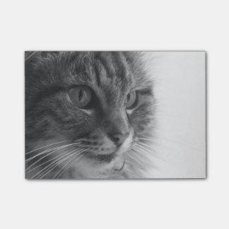 Monochrome cat notes