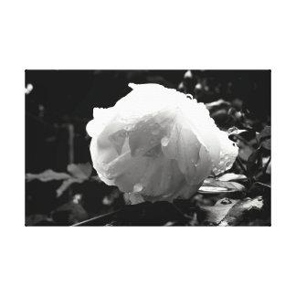 Monochrome Flower Canvas