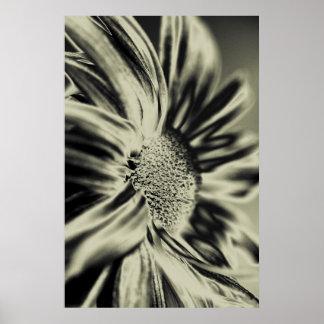 Monochrome flower poster