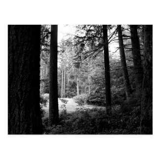 Monochrome Relief from Forest Darkness Postcard