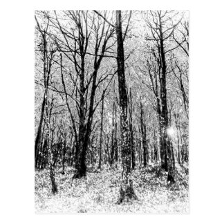 Monochrome Snow Forest Art Postcard