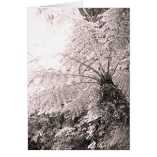 Monochrome Tree Fern Card