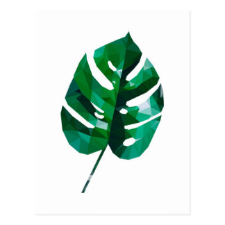Monstera Leaf Postcard