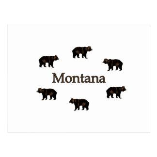 Montana Grizzly Bears Postcard