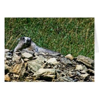 Montana Marmot Card
