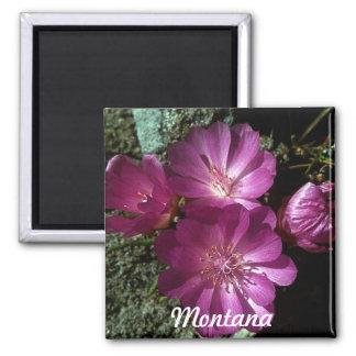 Montana State Flower Bitterroot Magnet