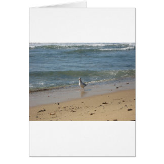 Montauk beach seagull love card