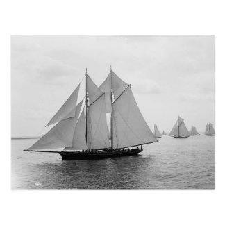 Montauk Sailboats (June.19.1897) Postcard