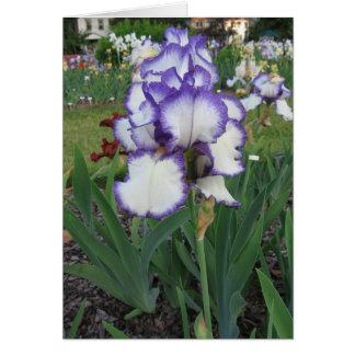 Montclair Iris Card