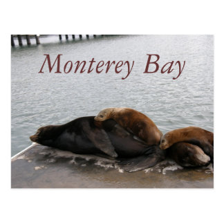 Monterey Bay - Sea Lions Post Card
