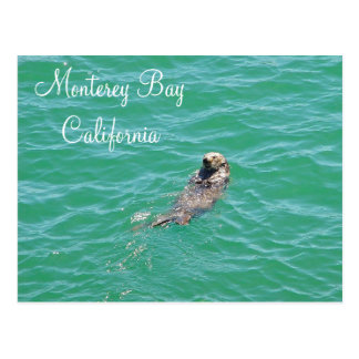 Monterey Bay Sea Otter Postcard