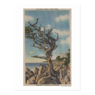 Monterey, CA - Old Witch Tree on 17 Mile Postcard