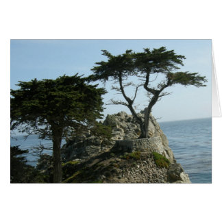 Monterey Cypress Greeting Card