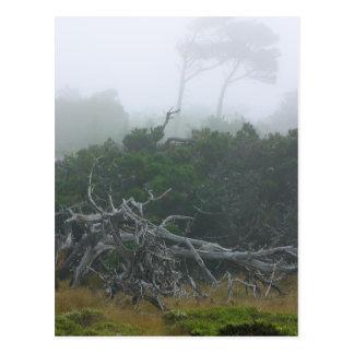 Monterey Fog Postcard