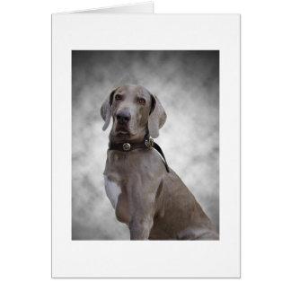 'Monty' | Greetings Card | 3-Legged Weimaraner Dog