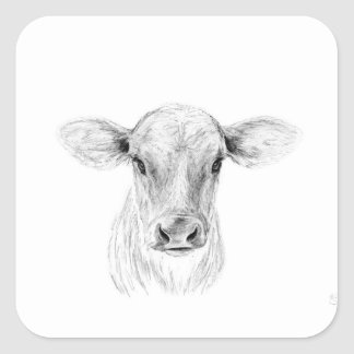 Moo A Young Jersey Cow Square Sticker