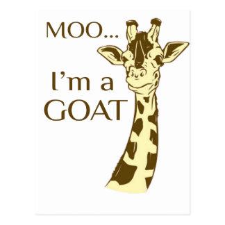 moo im a goat postcard