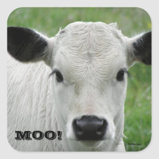 Moo - White Cow Stickers