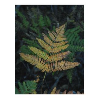 Moody Fern in the Santa Cruz Forest Letterhead