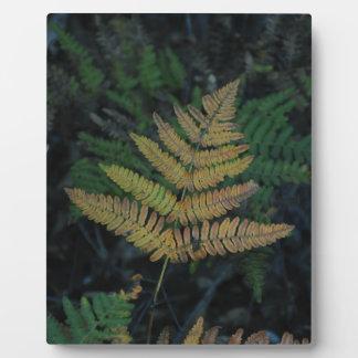 Moody Fern in the Santa Cruz Forest Plaque