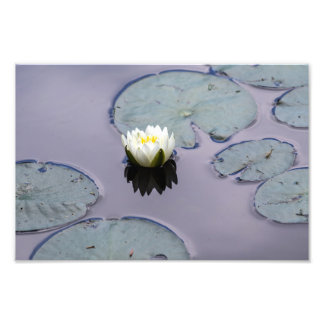 Moody Water Lily Photo Print
