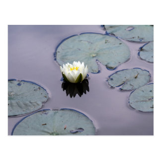 Moody Water Lily Postcard