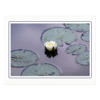 Moody Water Lily with Border Postcard