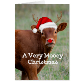 Mooey Christmas Card
