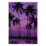 Moon and Palm Tree Poster