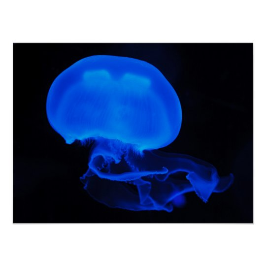 Moon Jelly Fish Poster