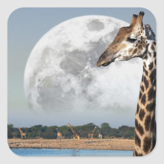 Moon rising over a group of Giraffe in Etosha Square Sticker