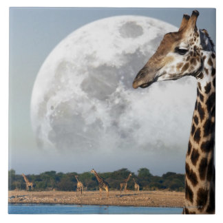 Moon rising over a group of Giraffe in Etosha Tile
