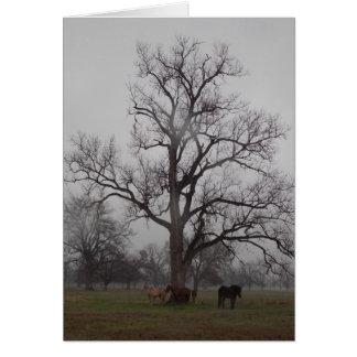 Moon River Ranch II Card