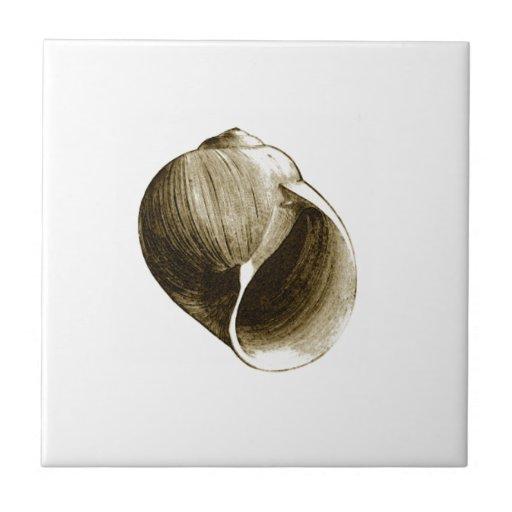 Moon Snail Shell (color illustration) Tile