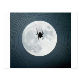 Moon spider postcard