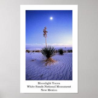 Moonlight Yucca Poster