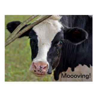 Moooving Announcment Postcard