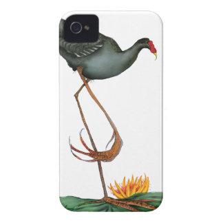 Moorhen bird, tony fernandes iPhone 4 covers