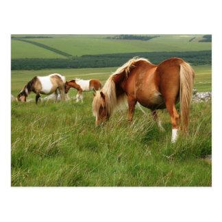 Moorland Ponies on Bodmin Moor Postcard