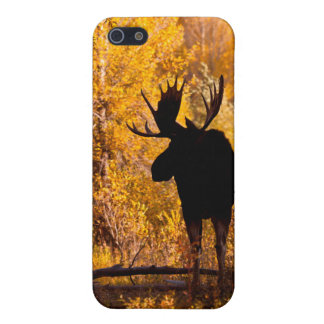 Moose (Alces Alces) Bull In Golden Willows 2 iPhone 5 Case